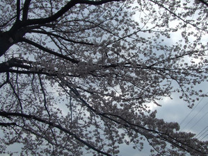 2011_04100022