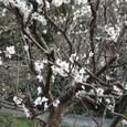 鎌倉瑞泉寺④